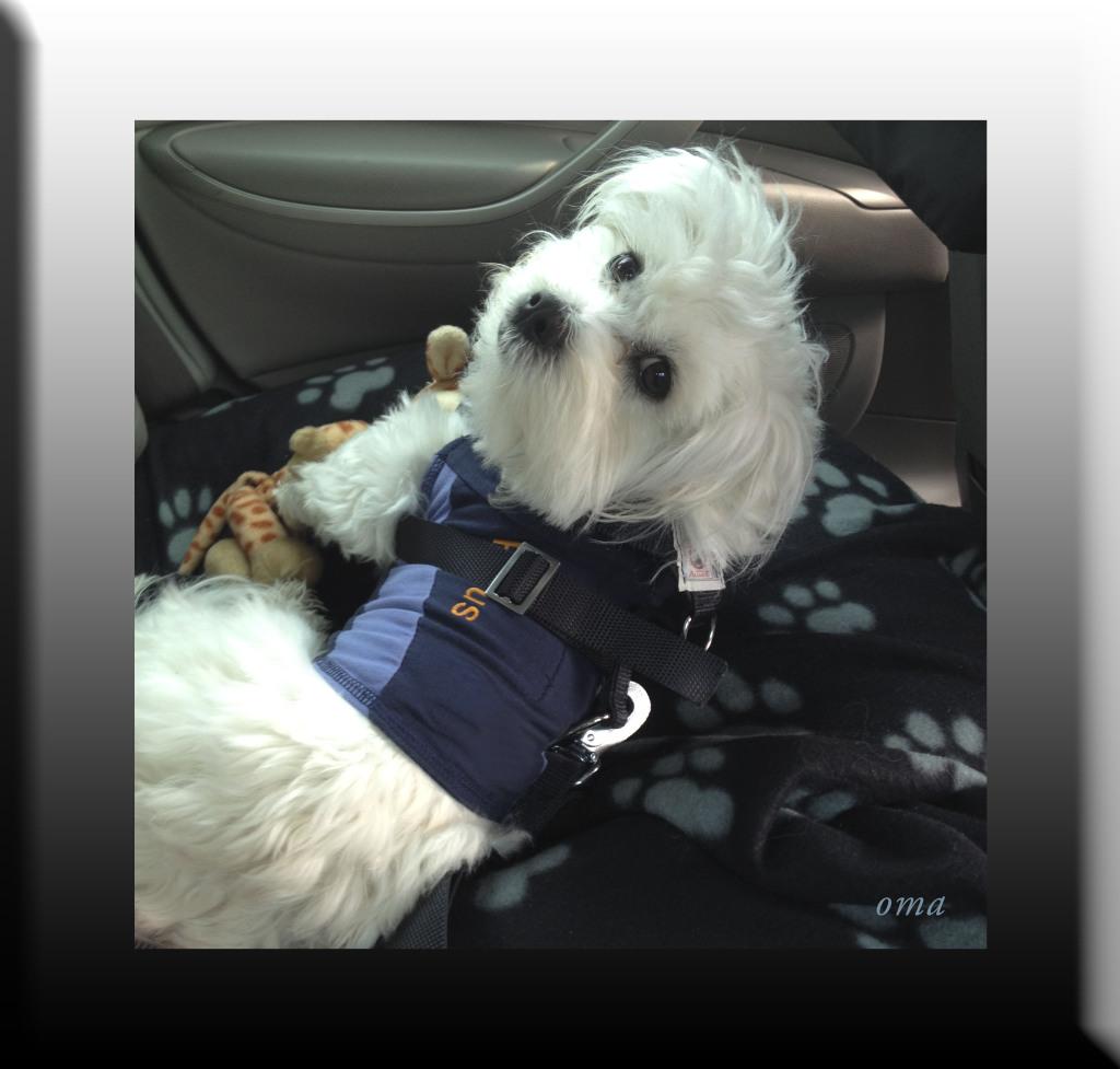 WP Rufus wears his seatbelt 08 JAN 2015